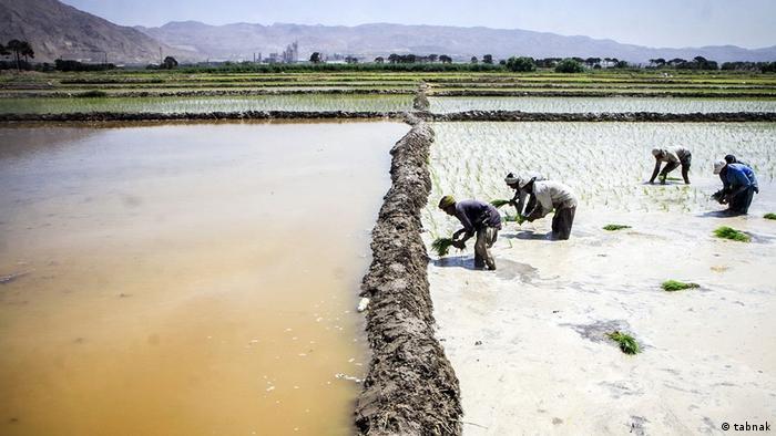 Iran - Landwirtschaft im Tehran (tabnak)