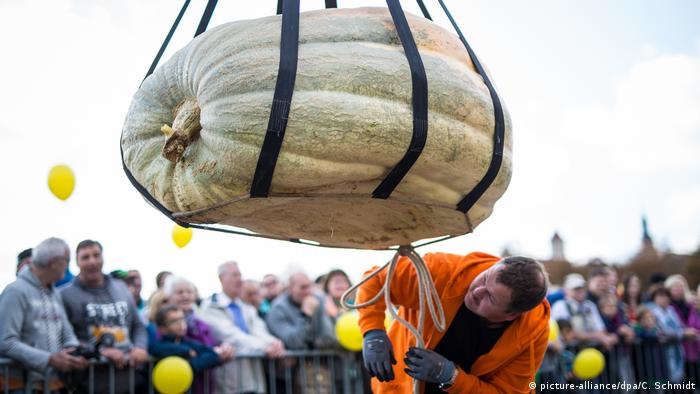 Big pumpkin being weighed