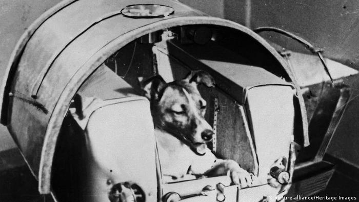 Laika erster Hund im Weltall (picture-alliance/Heritage Images)