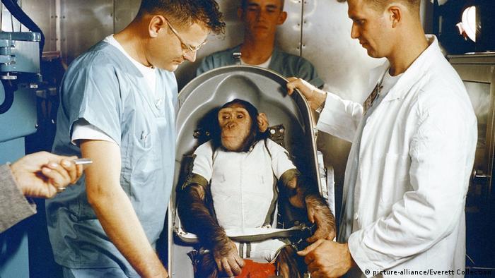 Chimpanzé Ham é enviado para o espaço pela Nasa, em 1961