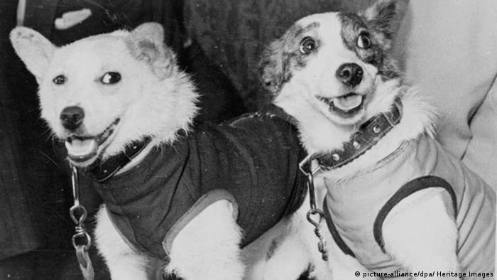 تا پیش از آنکه گاگارین به فضا برود، تجربه کمی از حضور موجودات زنده در فضا وجود داشت. بلکا و استرلکا، دو سگی که در تصویر دیده میشوند، ۴۰ موش، یک خرگوش و دو موش صحرایی نخستین حیواناتی بودند که به فضا فرستاده شدند و به سلامت به زمین بازگشتند. آنها روز ۱۹ اوت ۱۹۶۰ همراه با ماهواره فضایی اسپوتنیک ۵ متعلق به شوروی سابق به فضا پرتاب شدند و در یک کپسول به سلامت بر زمین فرود آمدند.