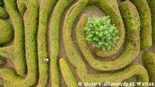 Gärtner schneiden die Hecken im Irrgarten von Schloss Mosigkau (Sachsen-Anhalt), aufgenommen am 22.09.2017 mit einer Drohne. Das als Unesco-Welterbe gelistete Dessau-Wörlitzer Gartenreich bekommt den Klimawandel zu spüren. Viele Pflanzen hatten in diesem Jahr mit hartnäckigen Schädlingen und Pilzerkrankungen zu kämpfen. Vor allem der als Hecke oder markanter Zierbaum stehende Buchsbaum ist bedroht. Die Raupen des Buchsbaumzünsler fressen Blätter und Rinde und die Pflanze stirbt ab. In den Jahren zuvor sei die Raupe in Wörlitz nicht vorgekommen - bei den wärmeren Temperaturen fühlt sie sich nun auch in Mitteleuropa heimisch. (zu dpa «Wörlitzer Park kämpft mit Pilzkrankheiten und anderen Schädlingen» vom 28.09.2017) Foto: Jan Woitas/dpa-Zentralbild/dpa +++(c) dpa - Bildfunk+++ | Verwendung weltweit