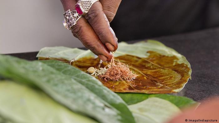 Indien Blatt der Betelnusspalme (Imago/Indiapicture)