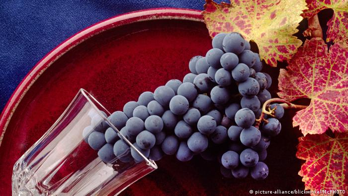 Grapes and wineglass (picture-alliance/blickwinkel/McPHOTO)