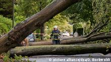 Trees on a road in Hamburg (picture alliance/dpa/D. Bockwoldt)