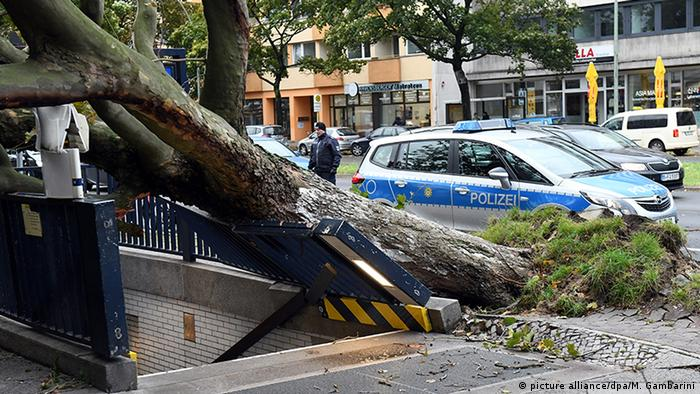 An uprooted tree fallen on a tram station entrance