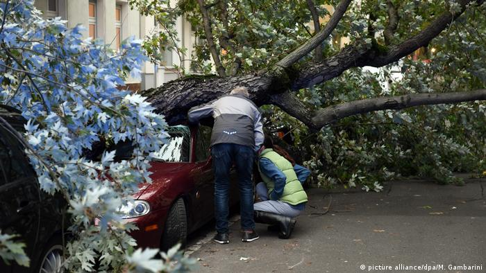 A tree crashed into a parked car in Berlin