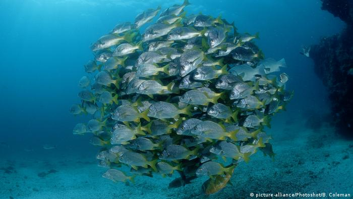 Fish swim in Galapagos, Ecuador (picture-alliance/Photoshot/B. Coleman)