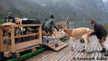 BdT Nationalpark Berchtesgaden Bauern transportieren Vieh über Königssee