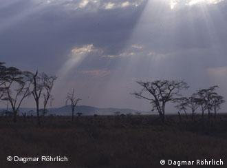 An image of the Serengeti park