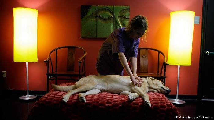 FLorida Chateau Poochie Hunde Wellness Massage (Getty Images/J. Raedle)