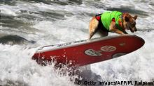 Kalifornien Surf City Surf Dog Hundesurfen (Getty Images/AFP/M. Ralston)