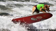 Kalifornien Surf City Surf Dog Hundesurfen