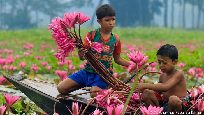 Bangladesch Barisal Ernte von Seerosen (DW/Muhammad Mostafigur Rahman)