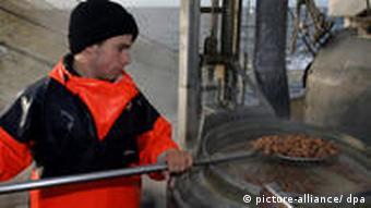 Kochen von Krabben auf dem Krabbenkutter (Quelle: dpa)