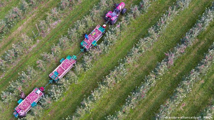 Събиране на реколта във Великобритания