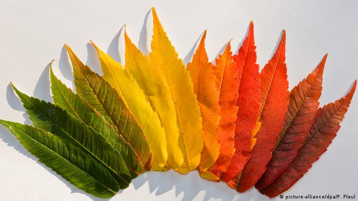 Colorful autumn leaves (picture-alliance/dpa/P. Pleul)