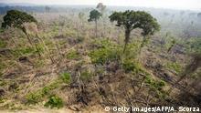 Brasilien Jamanxim Nationalpark Brandrodung Regenwald