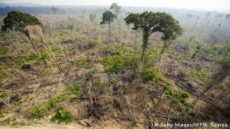 Deforestation in Brazil (Getty Images/AFP/A. Scorza)