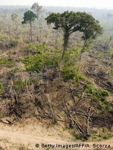 Уничтоженный лес в Бразилии