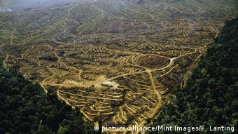 Borneo Regenwald Abholzung Palmöl Plantage