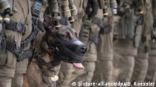 Deutschland Polizeihund | SEK Frankfurt am Main (picture-alliance/dpa/B. Roessler)