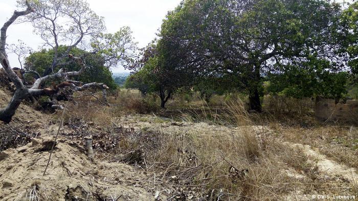 Floresta em Nampula, província no norte de Moçambique