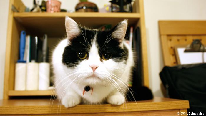 Eine Katze starrt in die Kamera (DW/K. Zeineddine)
