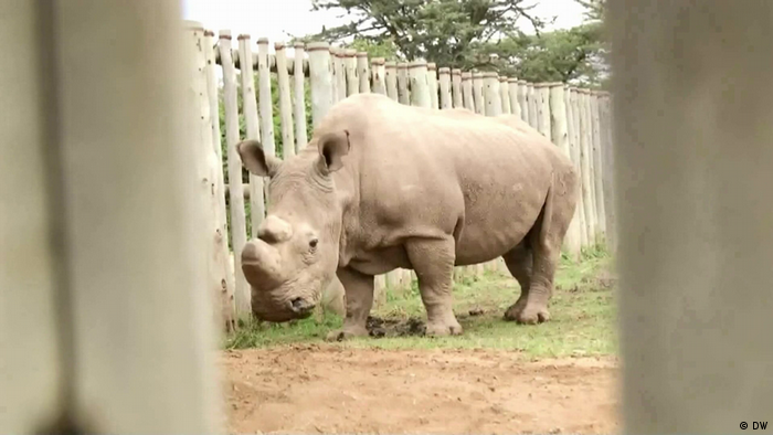 Un rinoceronte de pie junto a una valla.