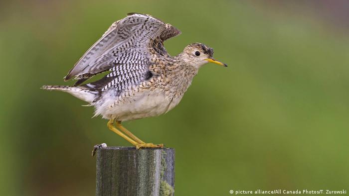 ENIGMAS DE LA NATURALEZA: Las aves suicidas de Ecuador