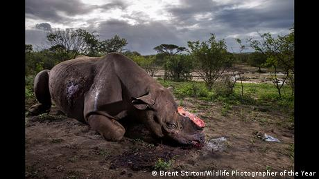 Wildlife Photographer of the Year 2017 (Foto: Brent Stirton/Wildlife Photographer of the Year)