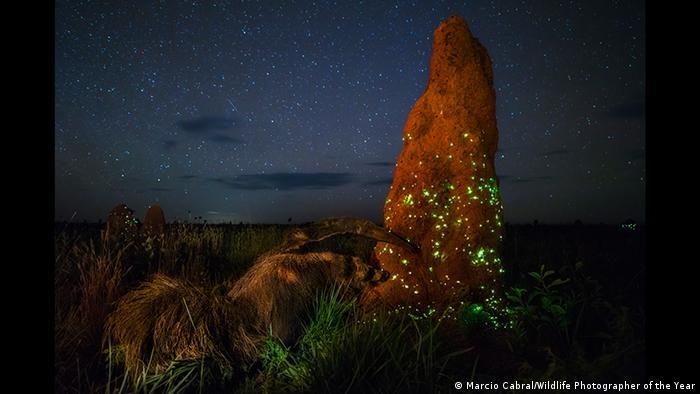 ব্রাজিলের এমাস ন্যাশনাল পার্কে নক্ষত্রখচিত আকাশের নীচে জোনাকির মেলা