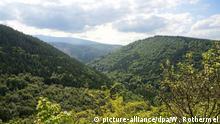 Deutschland Harz naturbelassener Wald