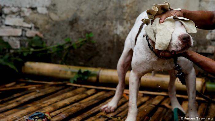 Bildergalerie Indonesien Tier-Kämpfe (Reuters/Beawiharta)