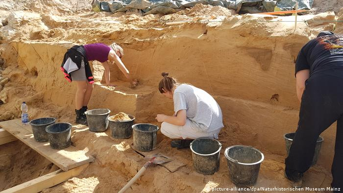 Archaeologists digging for the teeth (picture-alliance/dpa/Naturhistorischen Museum Mainz)