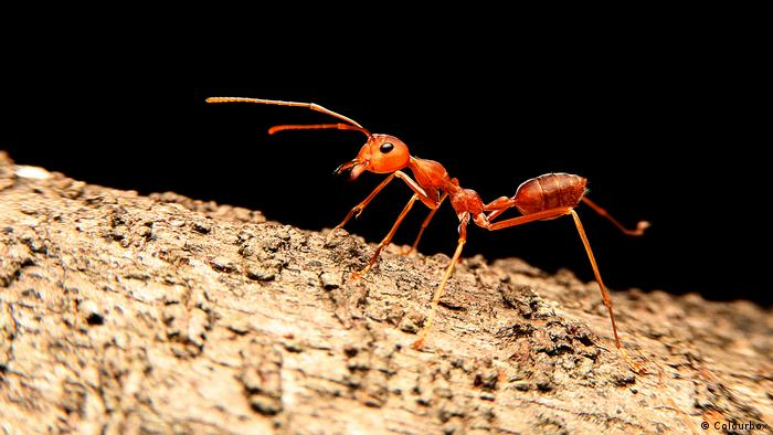 insects perish at the frontlines of humans war with nature