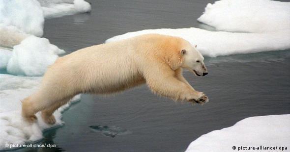 ARCHIV - Ein Eisbär in der Arktis springt von einer Eisscholle auf eine andere (Handout vom 05.08.1999). Erderwärmung und Klimawandel schreiten nach neuen Berechnungen von Wissenschaftlern viel schneller voran als bisher befürchtet. Das teilten der Leiter des Potsdam-Instituts für Klimafolgenforschung, Professor Hans Joachim Schellnhuber, und der Hamburger Meteorologe Jochem Marotzke am Donnerstag (09.10.2008) in Berlin mit. «Wir müssen damit rechnen, dass der Meeresspiegel in diesem Jahrhundert um einen Meter ansteigt», sagte Schellnhuber. In den vergangenen Jahren habe sich die Eisschmelze verdoppelt und verdreifacht. Foto: Greenpeace dpa +++(c) dpa - Bildfunk+++