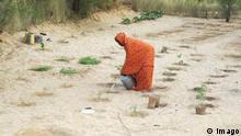 Mali Landwirtschaft in Timbuktu