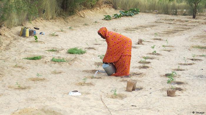 Une femme arrose des plantes à Tombouctou
