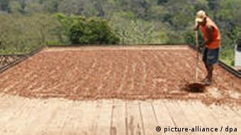 Anbau von Kakao in Brasilien