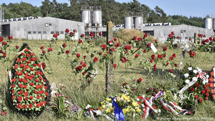 Roses and wreaths of flowers are attached to a fence in front of the Lety pig farm