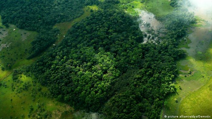 """Para el académico de la Universidad de Florida, """"en general en Brasil, Colombia, Perú, Venezuela, Guyana, Bolivia y Ecuador hay problemas de largos periodos de sequía en la Amazonía, algo que mata a los bosques tropicales. Como consecuencia también se produce la desaparición de especies""""."""