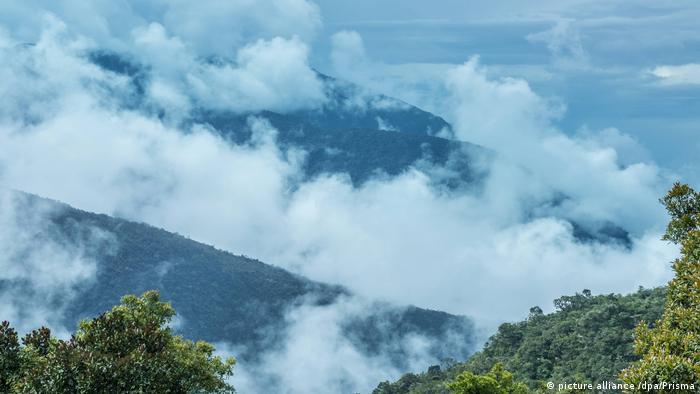 """Henry Briceño explica que el Amazonas """"es uno de los bosques que mas captura el CO2 de la atmósfera. Lo fija en la vegetación reduciendo su capacidad de absorción, llevando a que este pulmón verde ya no pueda capturar los excesos que ya existen de CO2 en la atmósfera, contribuyendo a que se caliente aún más la atmósfera. Es un círculo vicioso"""", dice."""