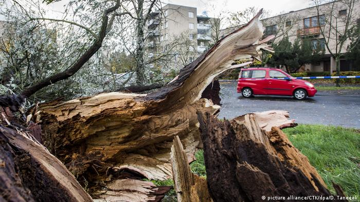 An uprooted tree in Czech Republic