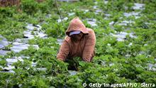 Honduras Frauen und Landwirtschaft