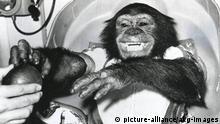 Bildergalerie Tiere im Weltall Schimpanse Ham (picture-alliance/akg-images)