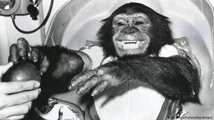 chimpanzee in space (picture-alliance/akg-images)