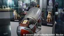 Bildergalerie Tiere im Weltall Belka und Strelka (picture-alliance/dpa/Sputnik/E. Biyatov)