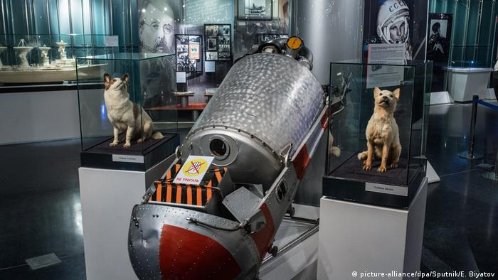 taxidermied dogs in museum (picture-alliance/dpa/Sputnik/E. Biyatov)