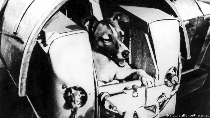 Laika the dog sits in a spaceship contraption (picture-alliance/Photoshot)